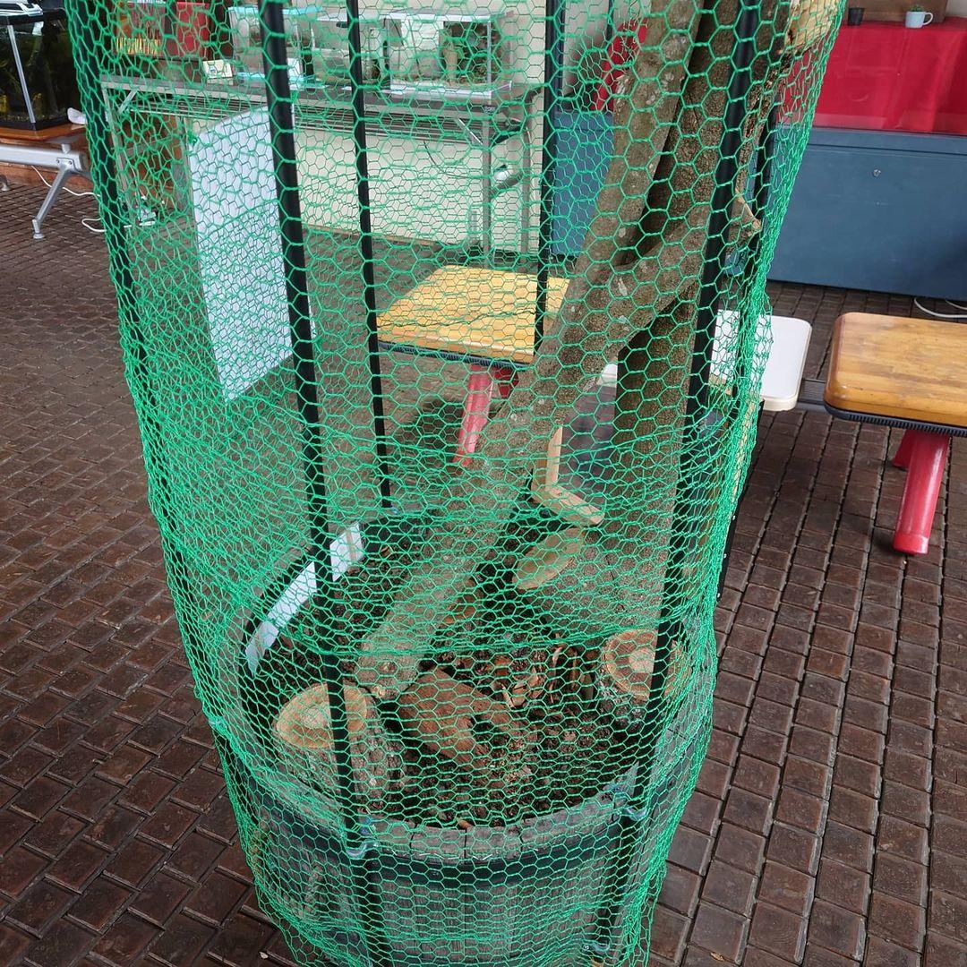 今年はカブトムシの立体展示に挑戦しています!